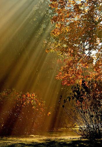Sunrays through the trees at Westonbirt Arboretum