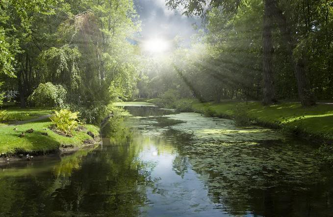 scenic-sunrays-on-forest-stream