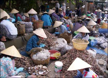 vietnamese women sorting shells %photo