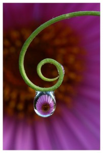water drop with flower reflected 203x300 %photo