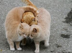catthirdwheel