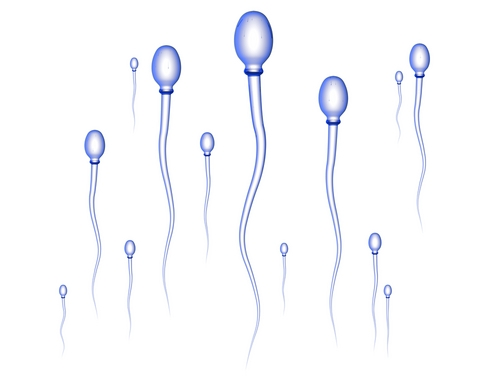 Any food to increase sperm quantity? | IslamicAnswers com: Islamic