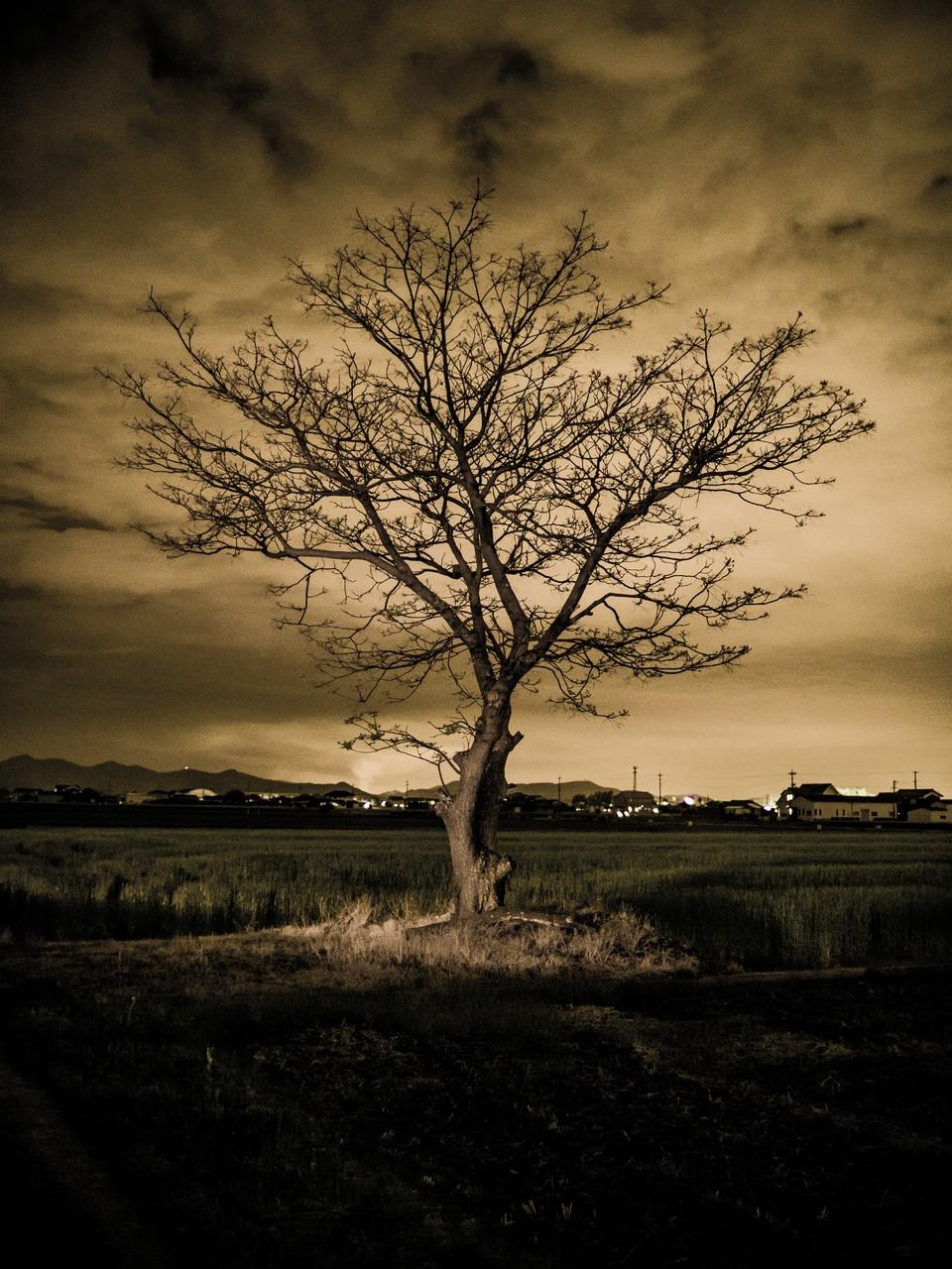 Takuma Kimura_Tree_YkZkQmI