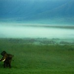 A huge elephant in the Ngorongoro Crater, Tanzania