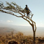 Hadza man in a tree