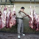 Worker at Amman Municipality Slaughterhouse