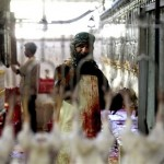 Slaughtering chickens at Amman Slaughterhouse
